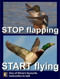 The WonderWind Energy Raiser & Stress Buster - Stop Flapping, Start Flying!